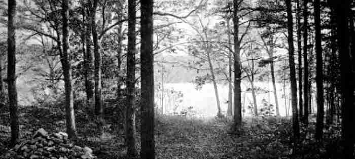 Walden Pond- Henry David Thoreau