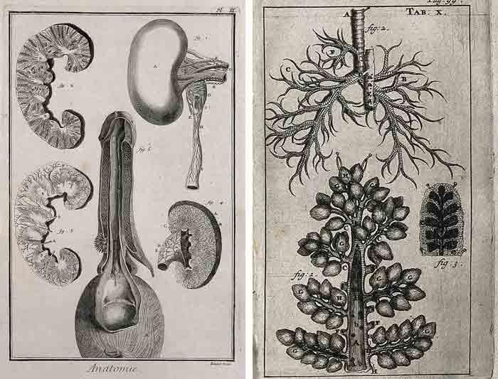 anatomie frederik ruysch